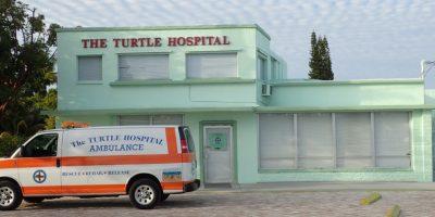turtle-hospital-3