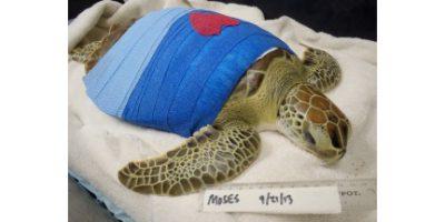 turtle-hospital-4